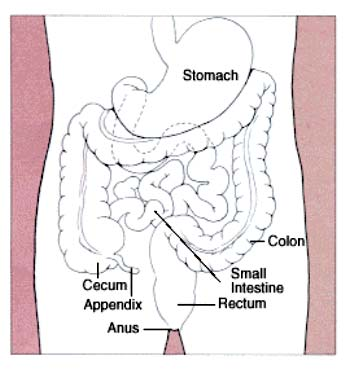 Colon, rectum, and other parts of digestive system
